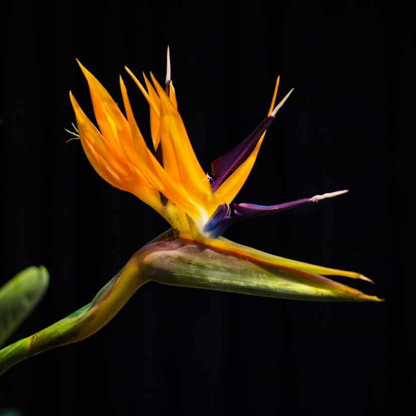 Floraliën