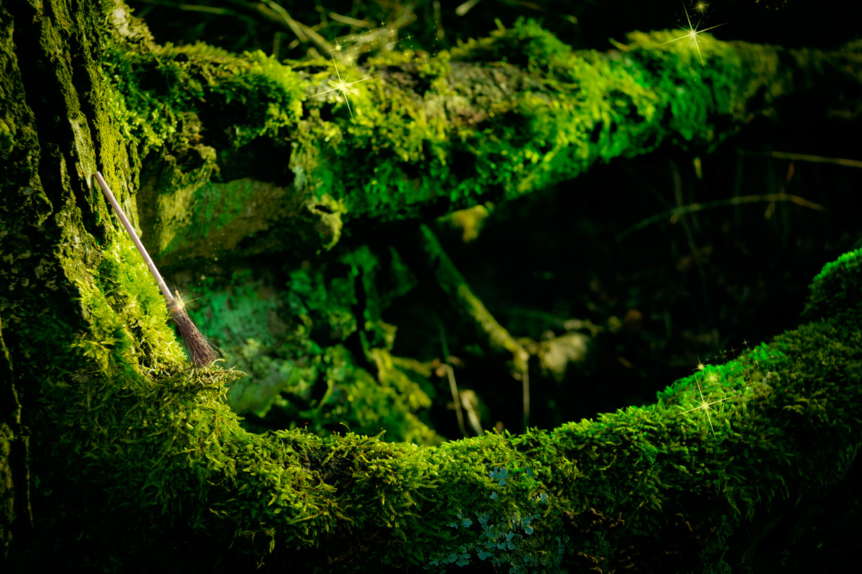 Project The Enchanted Forest